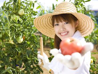 野菜作りを基礎から学べる