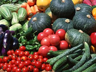 多種多様な野菜を栽培可能